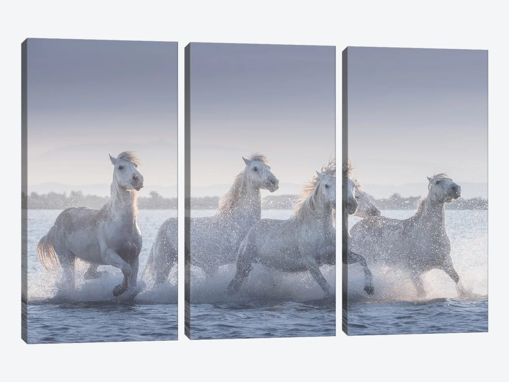 White Angels Of Camargue XIX 3-piece Canvas Art Print