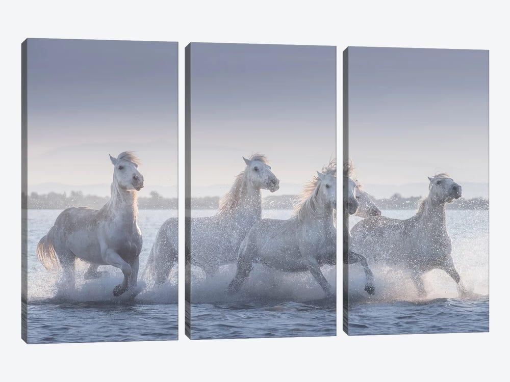 White Angels Of Camargue XIX by Daniel Kordan 3-piece Canvas Art Print