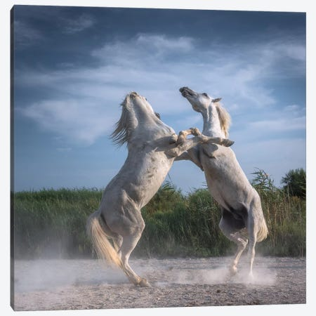 White Angels Of Camargue XX Canvas Print #KRD137} by Daniel Kordan Canvas Artwork