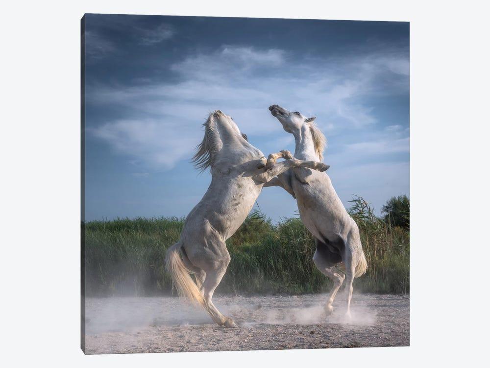 White Angels Of Camargue XX by Daniel Kordan 1-piece Canvas Artwork
