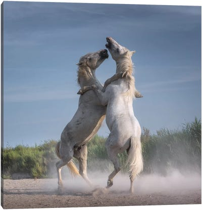 White Angels Of Camargue XXI Canvas Art Print