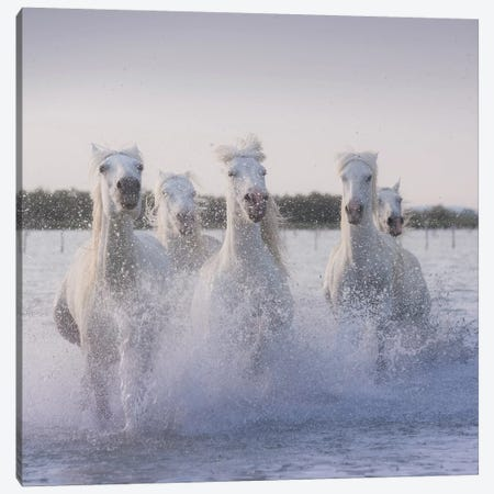 White Angels Of Camargue XXII Canvas Print #KRD139} by Daniel Kordan Canvas Art Print