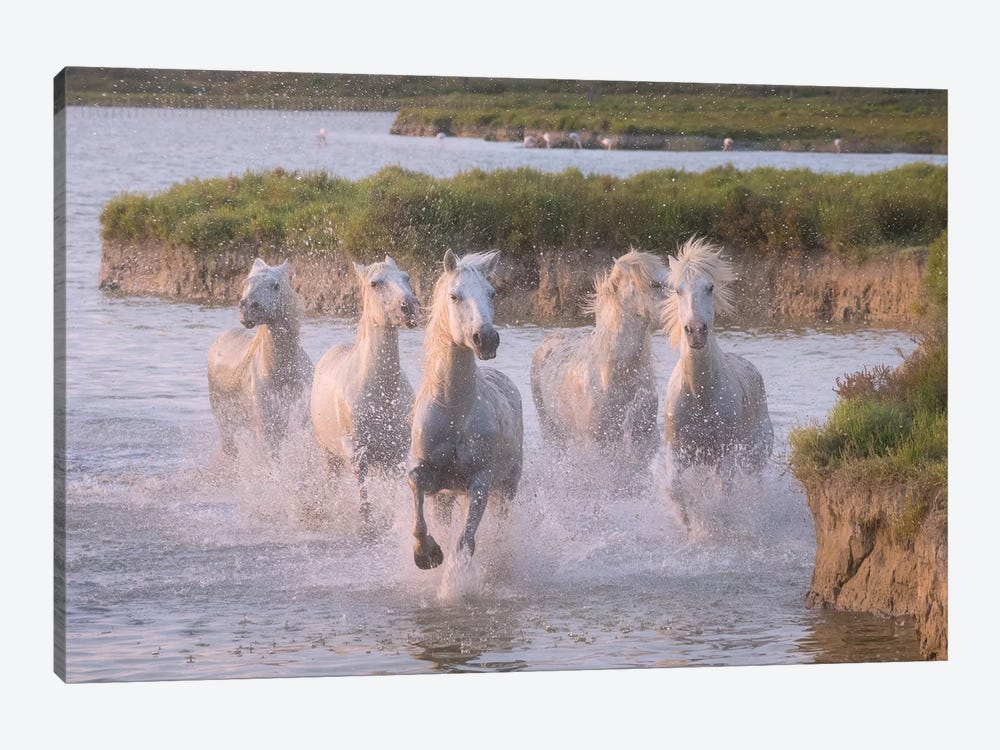 White Angels Of Camargue XXIII by Daniel Kordan 1-piece Canvas Artwork
