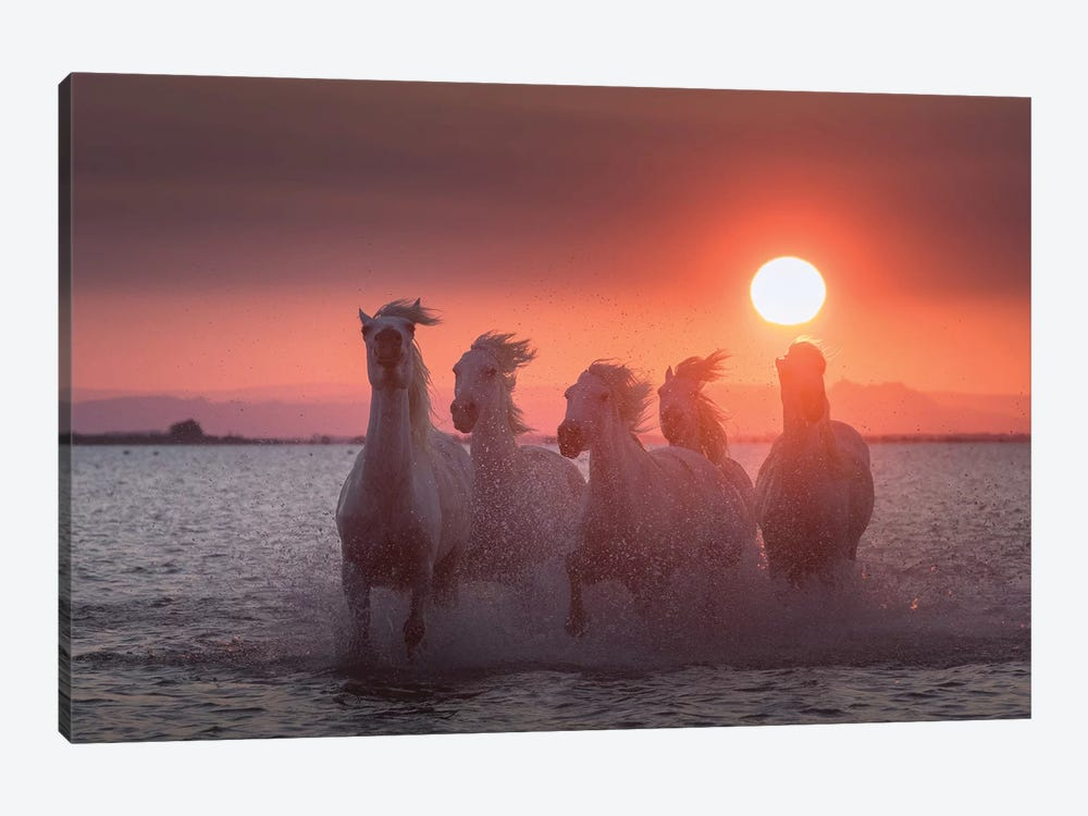 White Angels Of Camargue XXIV 1-piece Canvas Print