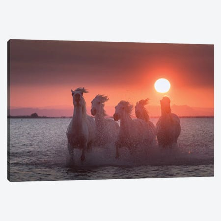 White Angels Of Camargue XXIV Canvas Print #KRD141} by Daniel Kordan Canvas Wall Art