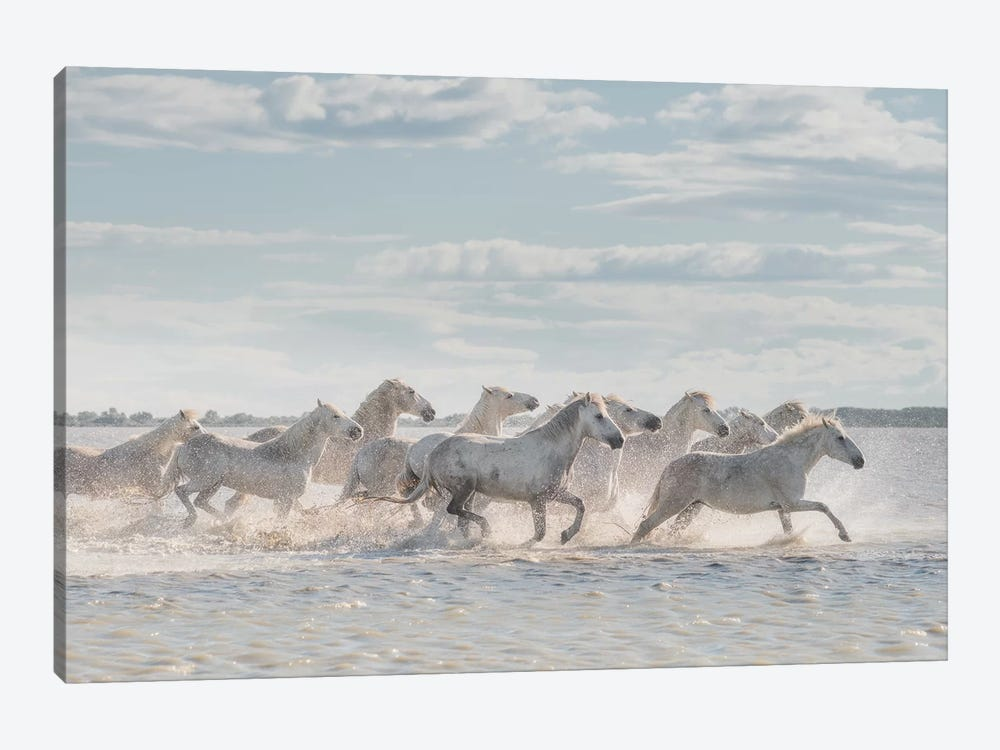 White Angels Of Camargue XXVI by Daniel Kordan 1-piece Art Print