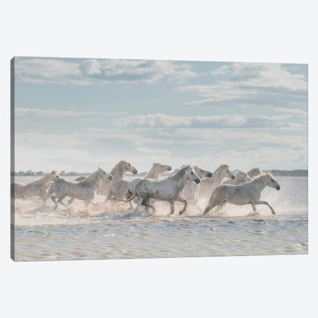 White Angels Of Camargue XXVI Canvas Print #KRD143} by Daniel Kordan Canvas Art