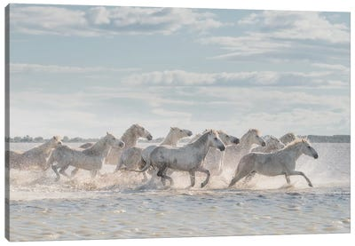 White Angels Of Camargue XXVI Canvas Art Print