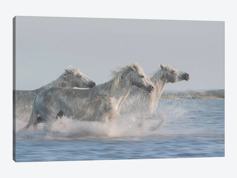 White Angels Of Camargue XXVII by Daniel Kordan 1-piece Canvas Artwork