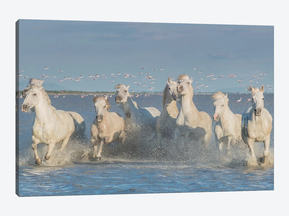 White Angels Of Camargue XXVIII by Daniel Kordan 1-piece Canvas Print