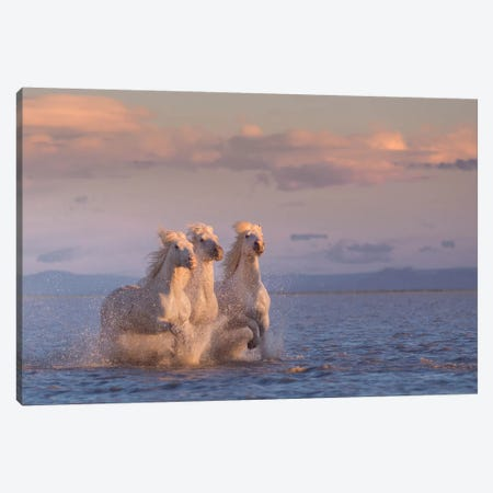 White Angels Of Camargue XXIX Canvas Print #KRD146} by Daniel Kordan Canvas Print