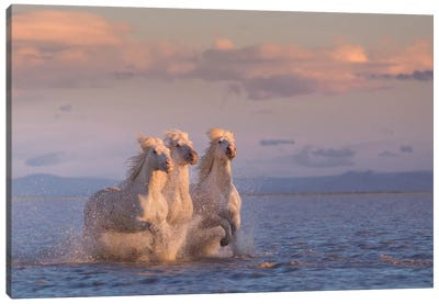 White Angels Of Camargue XXIX Canvas Art Print