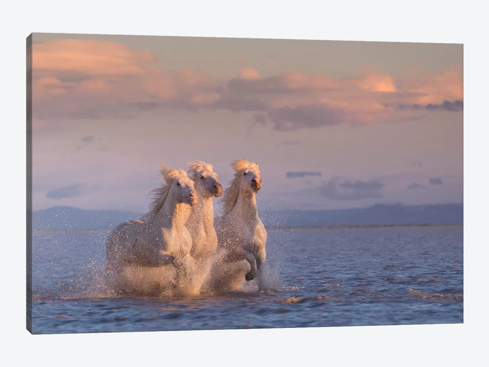 White Angels Of Camargue XXIX 1-piece Canvas Wall Art