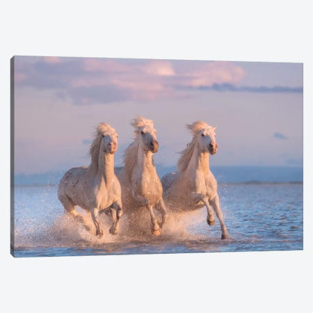 White Angels Of Camargue XXX Canvas Print #KRD147} by Daniel Kordan Canvas Print