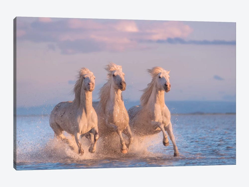 White Angels Of Camargue XXX by Daniel Kordan 1-piece Art Print
