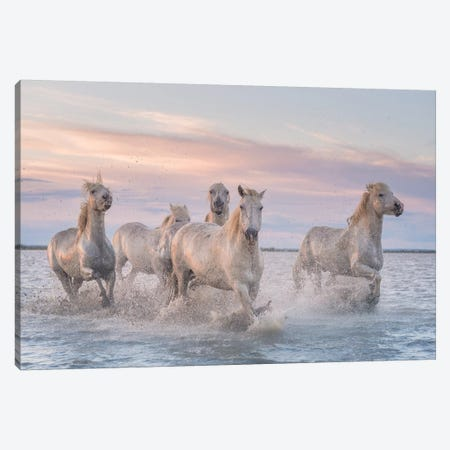 White Angels Of Camargue XXXI Canvas Print #KRD148} by Daniel Kordan Canvas Art