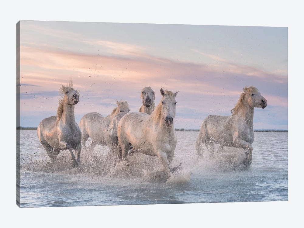 White Angels Of Camargue XXXI by Daniel Kordan 1-piece Canvas Artwork