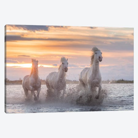 White Angels Of Camargue XXXII Canvas Print #KRD149} by Daniel Kordan Canvas Wall Art