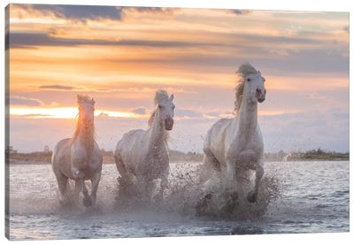 White Angels Of Camargue XXXII Canvas Art Print