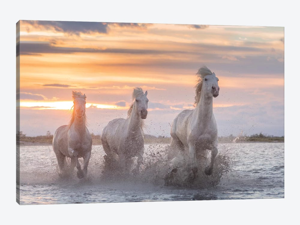 White Angels Of Camargue XXXII by Daniel Kordan 1-piece Canvas Print