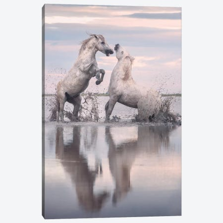 White Angels Of Camargue XXXIII Canvas Print #KRD150} by Daniel Kordan Canvas Art Print