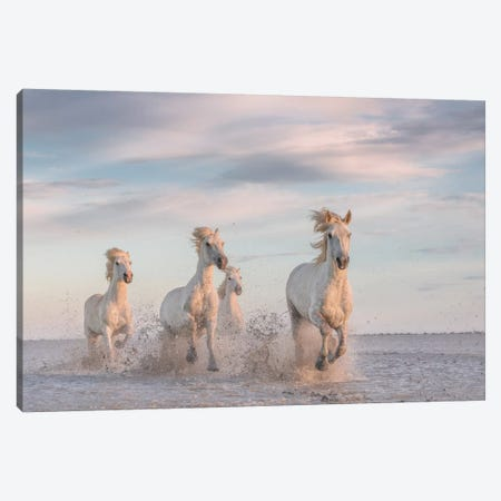 White Angels Of Camargue XXXV Canvas Print #KRD152} by Daniel Kordan Canvas Art Print