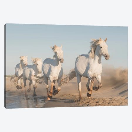 White Angels Of Camargue XXXVII Canvas Print #KRD154} by Daniel Kordan Canvas Art