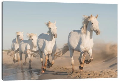 White Angels Of Camargue XXXVII Canvas Art Print