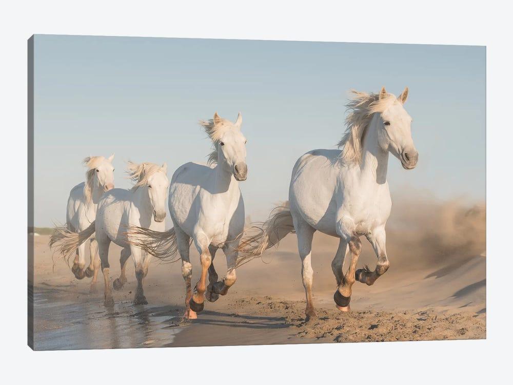 White Angels Of Camargue XXXVII by Daniel Kordan 1-piece Canvas Art Print