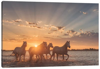 White Angels Of Camargue XXXVIII Canvas Art Print