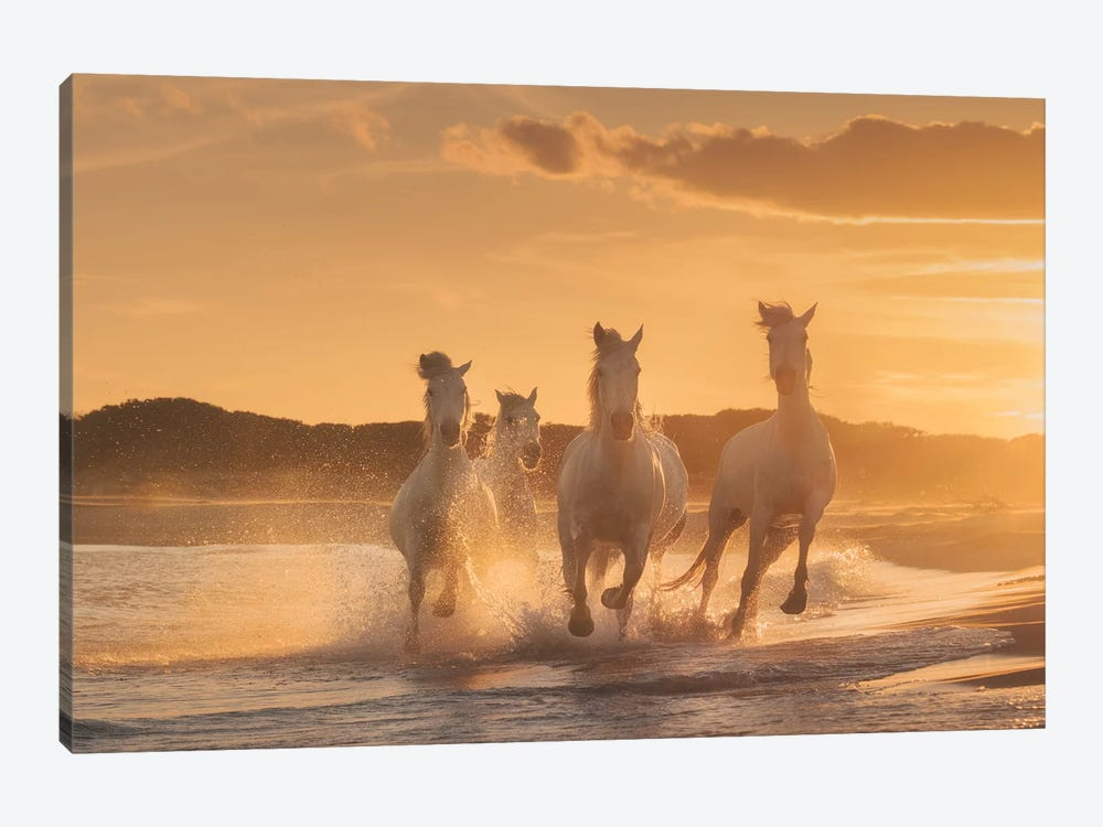 White Angels Of Camargue XXXIX by Daniel Kordan 1-piece Art Print
