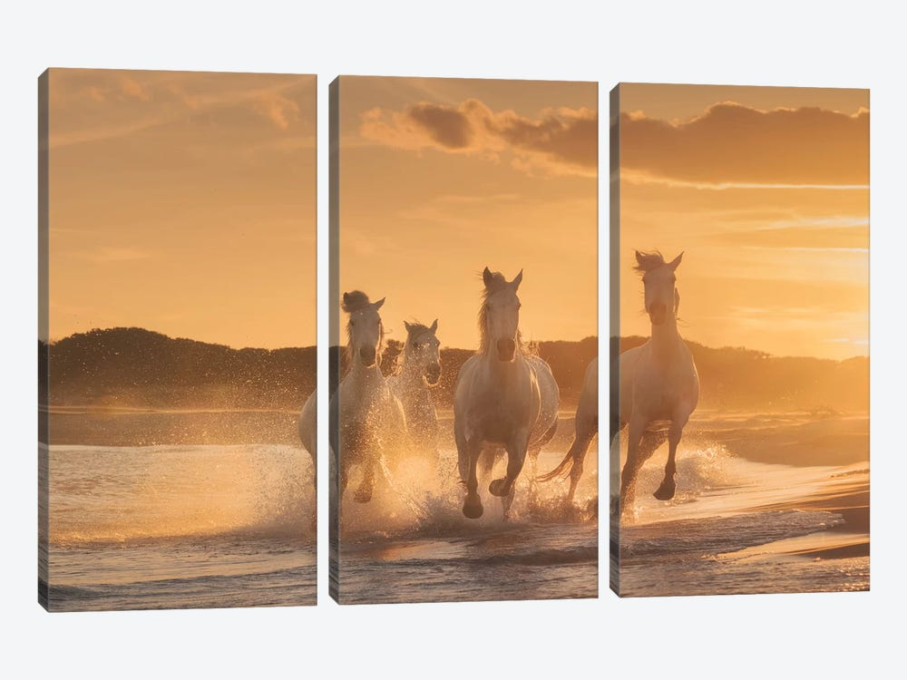 White Angels Of Camargue XXXIX 3-piece Canvas Art Print