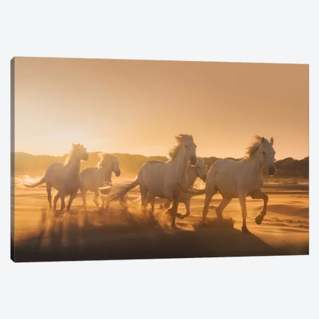 White Angels Of Camargue XLI Canvas Print #KRD158} by Daniel Kordan Canvas Print