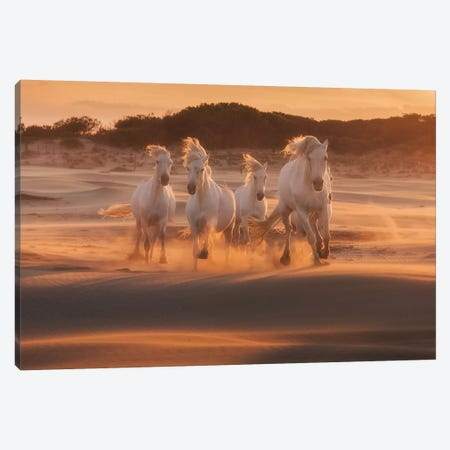 White Angels Of Camargue XLIV Canvas Print #KRD161} by Daniel Kordan Canvas Wall Art