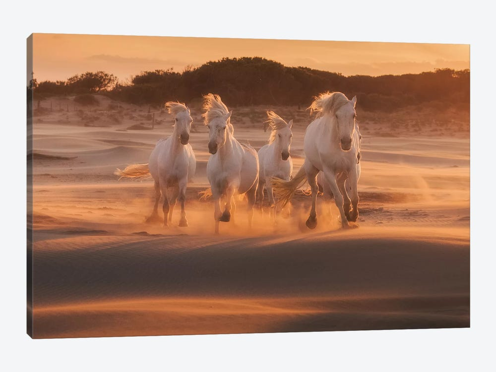 White Angels Of Camargue XLIV by Daniel Kordan 1-piece Canvas Print