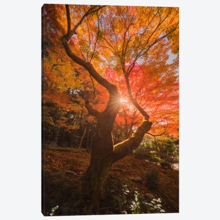 Autumn In Japan XXVIII Canvas Print #KRD28} by Daniel Kordan Canvas Artwork