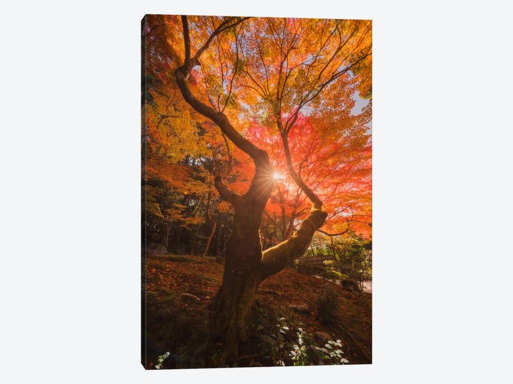 Autumn In Japan XXVIII by Daniel Kordan 1-piece Art Print