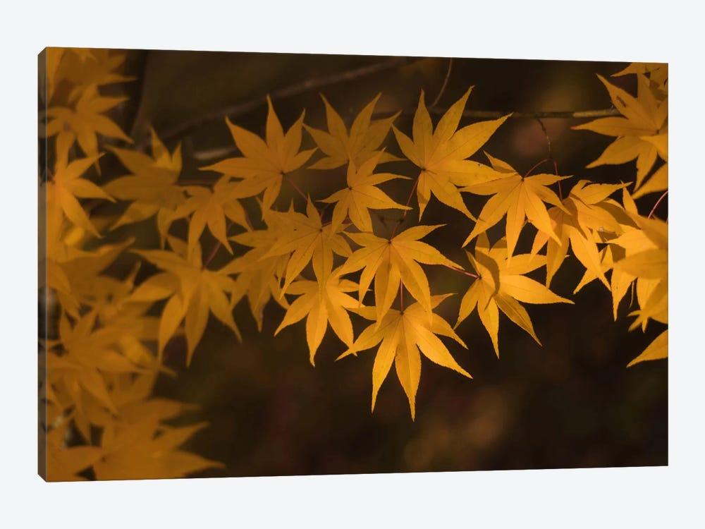 Autumn In Japan II by Daniel Kordan 1-piece Canvas Wall Art