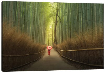 Bamboo Forest In Japan Canvas Art Print