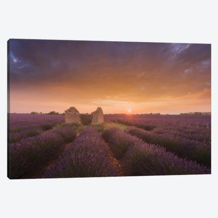 Lavender Fields Of Provence I Canvas Print #KRD48} by Daniel Kordan Canvas Wall Art
