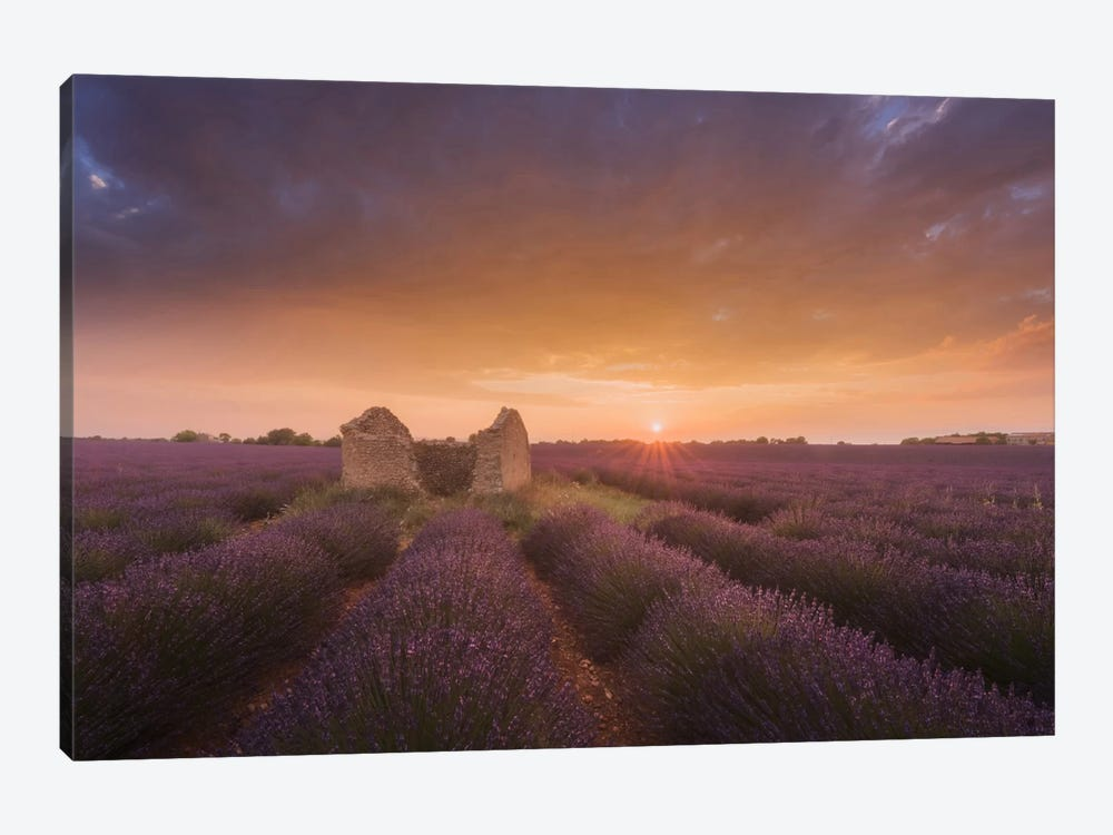 Lavender Fields Of Provence I by Daniel Kordan 1-piece Art Print