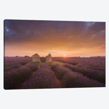 Lavender Fields Of Provence I Canvas Print #KRD48} by Daniel Kordan Canvas Wall Art