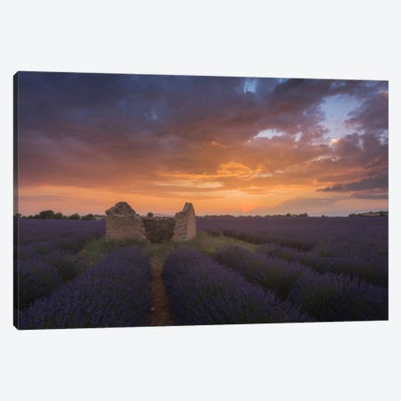 Lavender Fields Of Provence II Canvas Print #KRD49} by Daniel Kordan Canvas Art