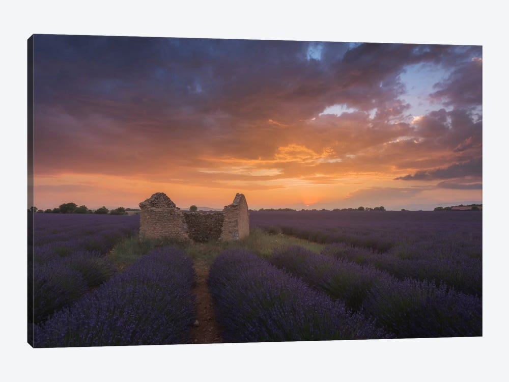 Lavender Fields Of Provence II 1-piece Canvas Art