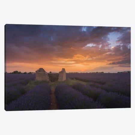 Lavender Fields Of Provence II Canvas Print #KRD49} by Daniel Kordan Canvas Art