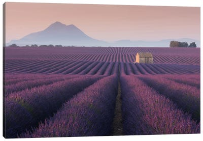Lavender Fields Of Provence III Canvas Art Print