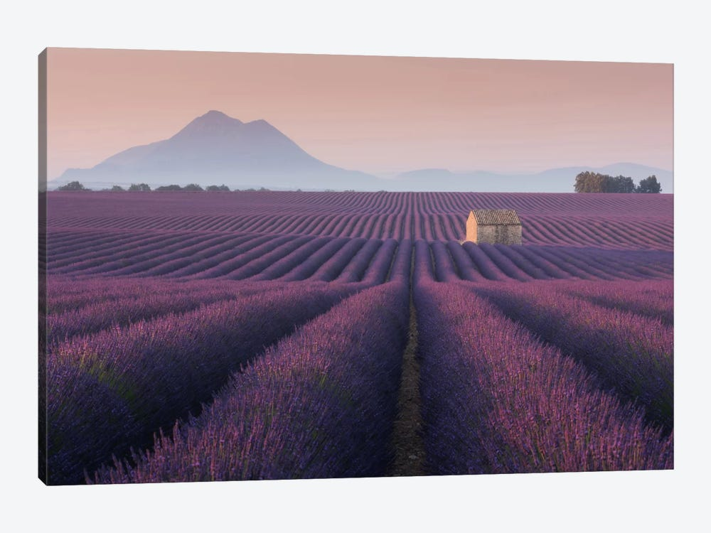 Lavender Fields Of Provence III 1-piece Canvas Wall Art