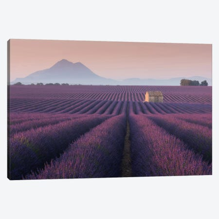 Lavender Fields Of Provence III Canvas Print #KRD50} by Daniel Kordan Canvas Art Print