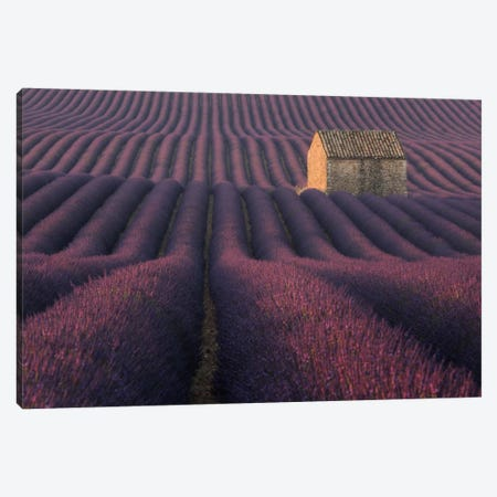 Lavender Fields Of Provence IV Canvas Print #KRD51} by Daniel Kordan Canvas Art Print