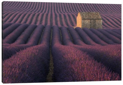 Lavender Fields Of Provence IV Canvas Art Print